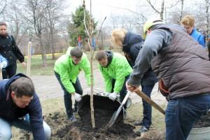 Высадка деревьев в районе Братеево