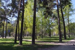 Парк Сосенки в Москве