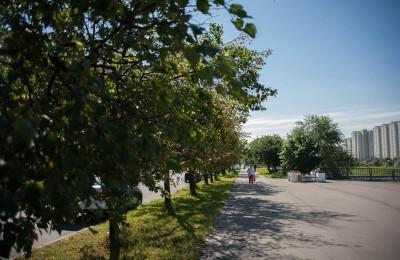 Аллея вдоль улицы Паромная