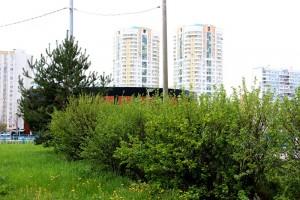 Растения в районе Братеево