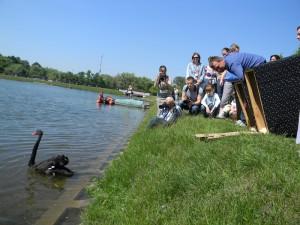 Выпуск лебедей в Царицынский пруд