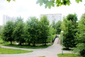 Деревья в районе Братеево