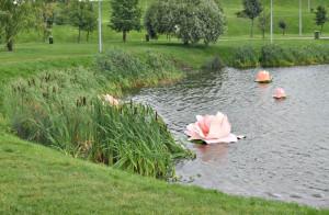 Лотосы в Братеевском парке