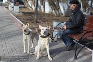 Житель района Братеево со своими собаками