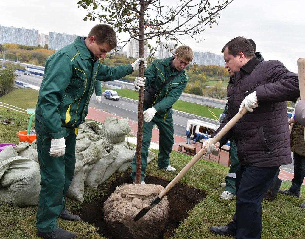 Весной на территории района Братеево высадят 10 деревьев и 60 кустарников