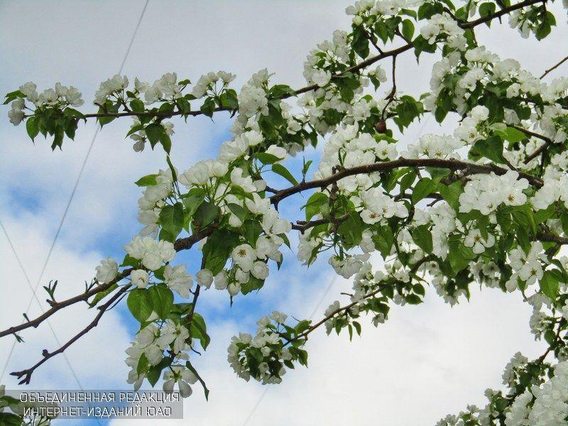 Цветы в районе Братеево